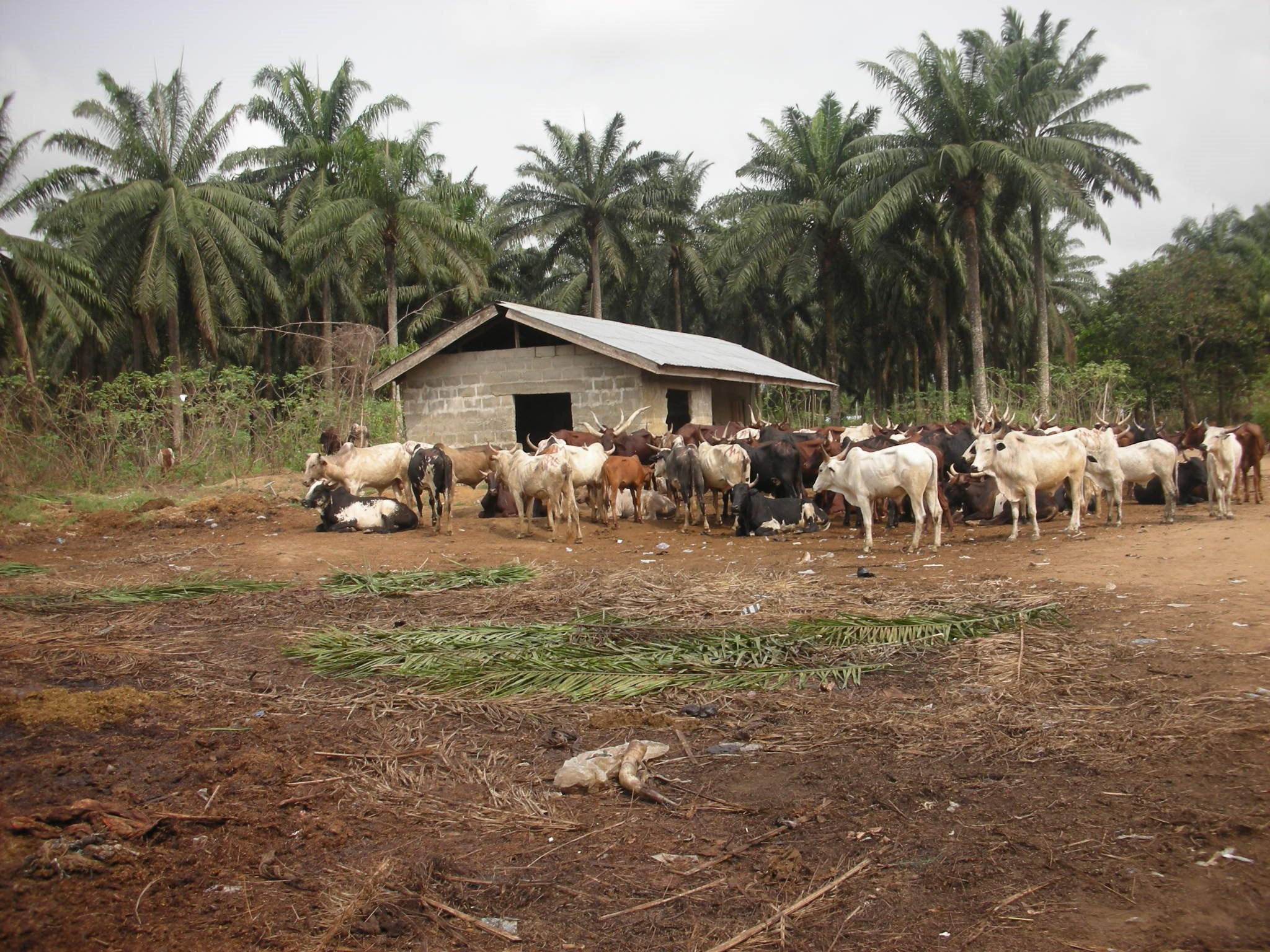 Cow Dung to Biogas
